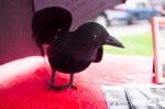 Ravenswing2011-022