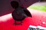 Ravenswing2011-023