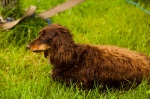 Ravenswing2011-061