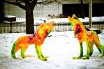 WinterludeConfedPark2012-28